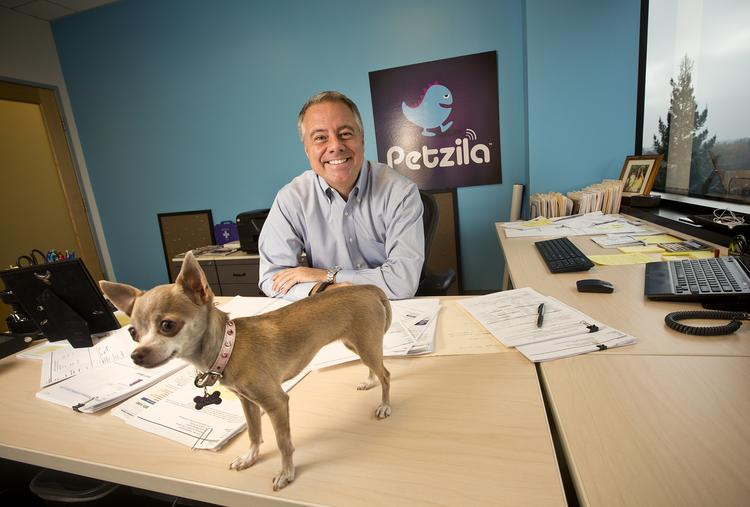 David Clark of Petzila in his office with his dog, Bella, who is getting quality face time.