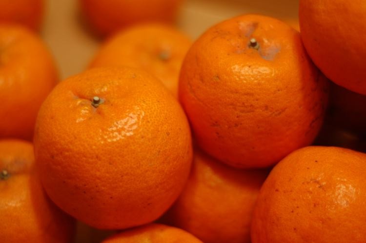 The Florida citrus industry creates a $9 billion annual economic impact, employing nearly 76,000 people.