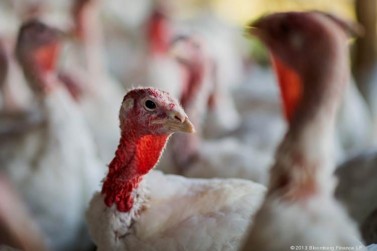Check out a map of where Thanksgiving turkeys come from.