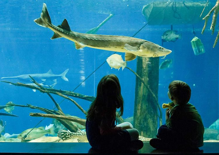From Albany To Chattanooga To See An Aquarium Albany