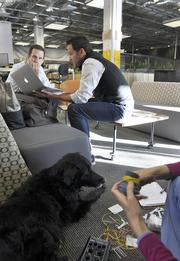 Patrick Quinlan, CEO, right, talks with Philip Winterburn, CIO of Convercent while his dog, Jasmine gets acupuncture.