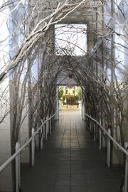 These branches create an arch that will be lit with lights for the entrance to the exhibit.