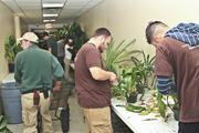 The Conservatory staff worked to clean up all the plants before the new holiday exhibit opens. 11/18/13