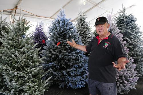 Hawaii Christmas tree lot moves after 10 years at Ala Moana Center:  Slideshow - Pacific Business News - Hawaii Christmas Tree Lot Moves After 10 Years At Ala Moana Center