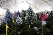 Joy Barnhart looks for a small Christmas tree to put on her piano in her condominium amongst a selection of Christmas trees in various sizes and colors.