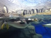 The penguin exhibit is a popular stop at the Tennessee Aquarium in Chattanooga.
