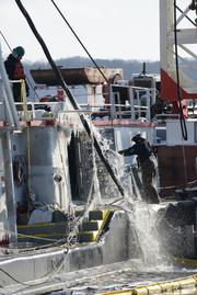The 154-foot towboat Stephen L. Colby is dewatered during the lift phase of salvage operations in LeClaire, Iowa, on Monday. Crews have worked continuously to repair and refloat the vessel since it reportedly struck an unknown submerged object in the Mississippi River channel and sank Nov. 25.
