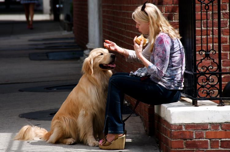 Priceline named Tampa a top destination for traveling with pets.
