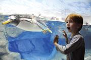 Will Von Gremp, 4, of Arkansas, catches an up-close look at a penguin at the Tennessee Aquarium in Chattanooga.