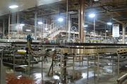 The plant has its own glass factory down the road that produces glass just for its beer bottles.