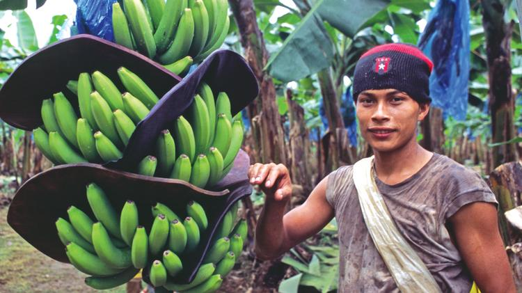 The Cutrale-Safra offer was seen as an alternative to Chiquita's plans to buy Fyffes plc and move the combined headquarters to Dublin, Ireland.