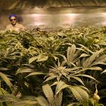 Suthers to defend Colorado's pot laws from suit by neighboring states