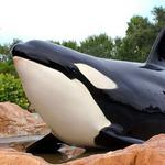 NY law firm explores class-action suit against SeaWorld