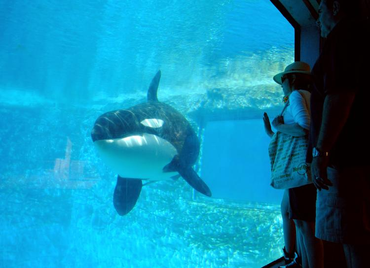 SeaWorld is under attack by critics thanks to the widespread attention on CNN's Blackfish documentary.