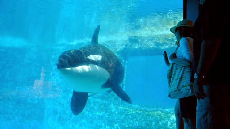 Could SeaWorld's low stock price catch the eye of larger fish on Wall Street?