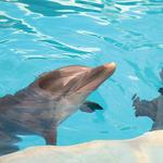 Clearwater Marine Aquarium names <strong>Jen</strong> <strong>Carlisle</strong> director of tourism marketing