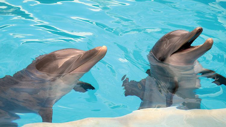 Winter and Hope during training at Clearwater Marine Aquarium.