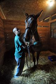 Groom Nick Bush with Unbridled Valor at McMahon of Saratoga Thoroughbreds.