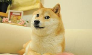 The Verge has finally uncovered the story of the Shiba Inu behind Doge.