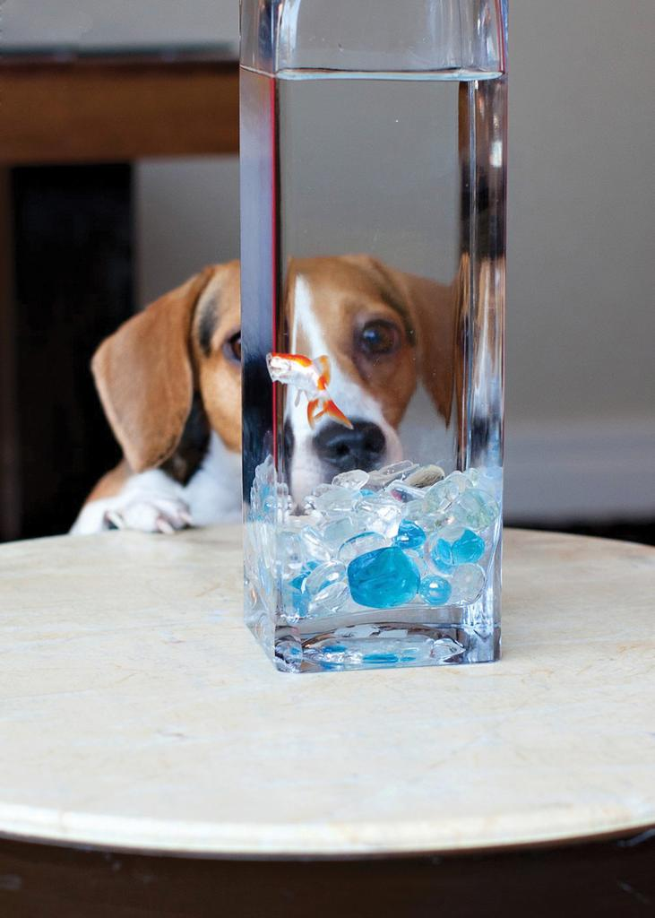 Hotel Palomar offers the Higgins WAGS package for VIPs (very important pets), which includes pet-friendly overnight luxury accommodations with a bed, bowls, designer treats and a pet-walking area. If you can't bring your pet, you can order a companion goldfish to keep you company during your stay.