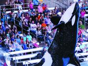 SeaWorld Entertainment Inc. (NYSE: SEAS) has a lot of plans that may help Orlando's ability to draw visitors.