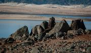 A rock outcropping is intertwined with tree stumps, seen with what's left of the water at Folsom Lake.