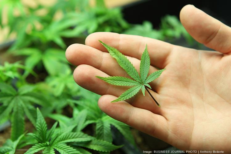 Insys Therapeutics Inc. has completed its $36.8 million initial public offering to help bolster sales of its medical marijuana drug.