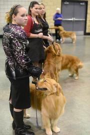 Lindsay Siflinger and her golden retriever, Blaze, await their breed's competition.