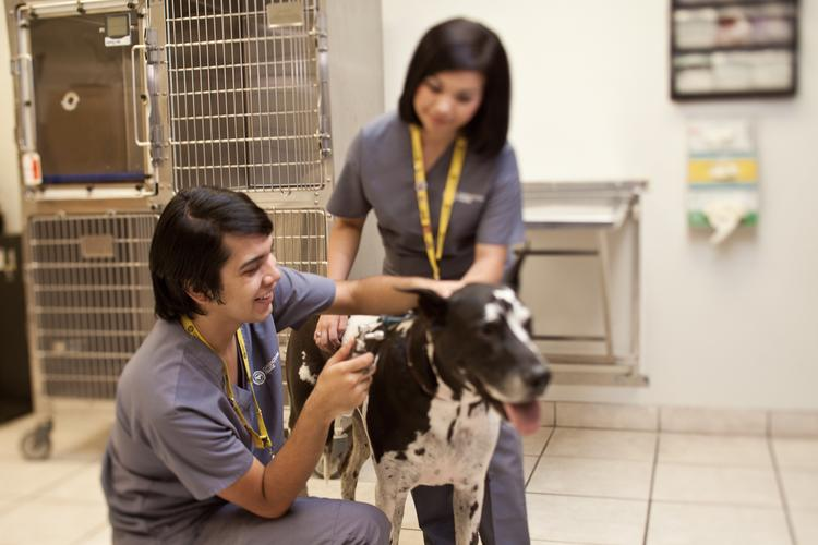 Carrington College is hosting an open house at its three Valley campuses on Jan. 7. Veterinary assisting is one of the school's degree programs.