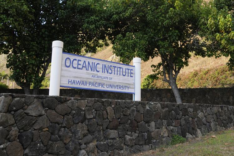 The merger between Hawaii Pacific University and the Oceanic Institute, seen in this 2013 file photo, was completed on Jan. 1. The Waimanalo institute had been an affiliate of HPU since 2003.