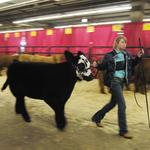National Western Stock Show would get extreme makeover under redevelopment plan (Slideshow)