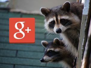 Kevin Rose is no fan of angry raccoons. Neither is he of Google's attempt to integrate Google Plus into Gmail.