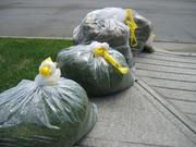 Trash type: Yard and pet waste Percentage of landfill waste: 5.9%