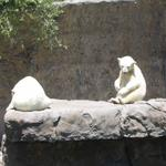 Colorado zoos named to TripAdvisor's top 10 in the country (Slideshow)