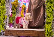 At Fashion for Paws, young professionals raise funds for a chance to walk the catwalk alongside canine companions.