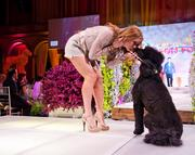 Attendance at the Washington Humane Sociey's Fashion for Paws has exploded in  just seven years. The show now draws a crowd of 1,700 people and aims to raise $750,000 during this year's event.