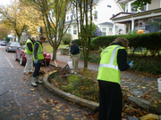 A group of residential Green Street Stewards clear leaves from their adopted bioswale.