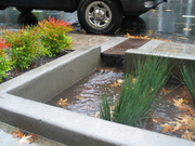 During rainstorms, bioswales slow down and filter water runoff before it enters the sewer system.