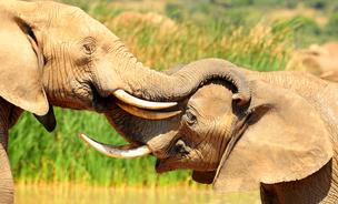Conservationists in Africa are using Twitter to track elephant movements.