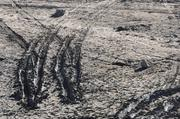 Tire tracks are seen in the muddy lake bed at Folsom Lake. The lake's historic low levels has attracted visitors looking at terrain unexposed for decades.