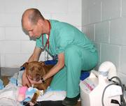 Dr. Kiko Bracker and a canine patient taken at Angell Animal Medical Center in Boston.