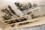 """Black mold is even worse in the summer months. """"You can barely stand being in here,"""" said Bob Johnson, groundskeeper."""