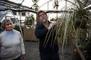 Rita Baldwin, pictured left, co-owner of the Orchid Gallery in Pittsboro, stands beside her son Jeff, also a co- owner, as he describes how the Dendro pierardii orchid blooms, photosynthesizes and obtains nutrients from its environment on Jan. 23.