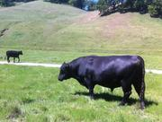 Though pastures were greener last spring, they weren't green enough -- the two previous winters were also too dry.