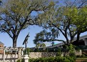 The oak trees are from the original garden, as well as the statue of Mercury in the center area.