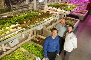The Millionair Club Charity in partnership with UrbanHarvest has set up a commercial hydroponic farm in the basement of the Millionair Club in Belltown.  From left,  Chris Bajuk, Millionair Club Charity Urban Farming Program Manager and founder of UrbanHarvest, Scott Marx, General Manager of the Westlake Tutta Bella, and Brian Gojdics, Executive Chef for Tutta Bella. Tutta Bella Neapolitan Pizzeria has signed on as the programÕs first customer and fresh basil from the hydroponic farm will be first used at the Westlake Tutta Bella.
