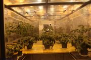These are tomato plants in a controlled environment to test the capability of growth in space.