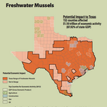 Texas lizard, mussel study could have economic impact in Austin