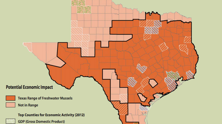 This map shows the range of freshwater mussels in Texas. The U.S. Fish and Wildlife Service is considering declaring the species endangered or threatened. Another species, the spot-tailed earless lizard, is also under consideration.