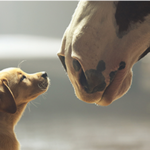 Four questions with the brains behind Budweiser's 'Puppy Love'